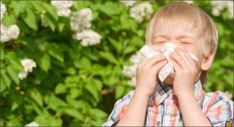 allergie05